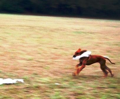 First coursing practice. 2007